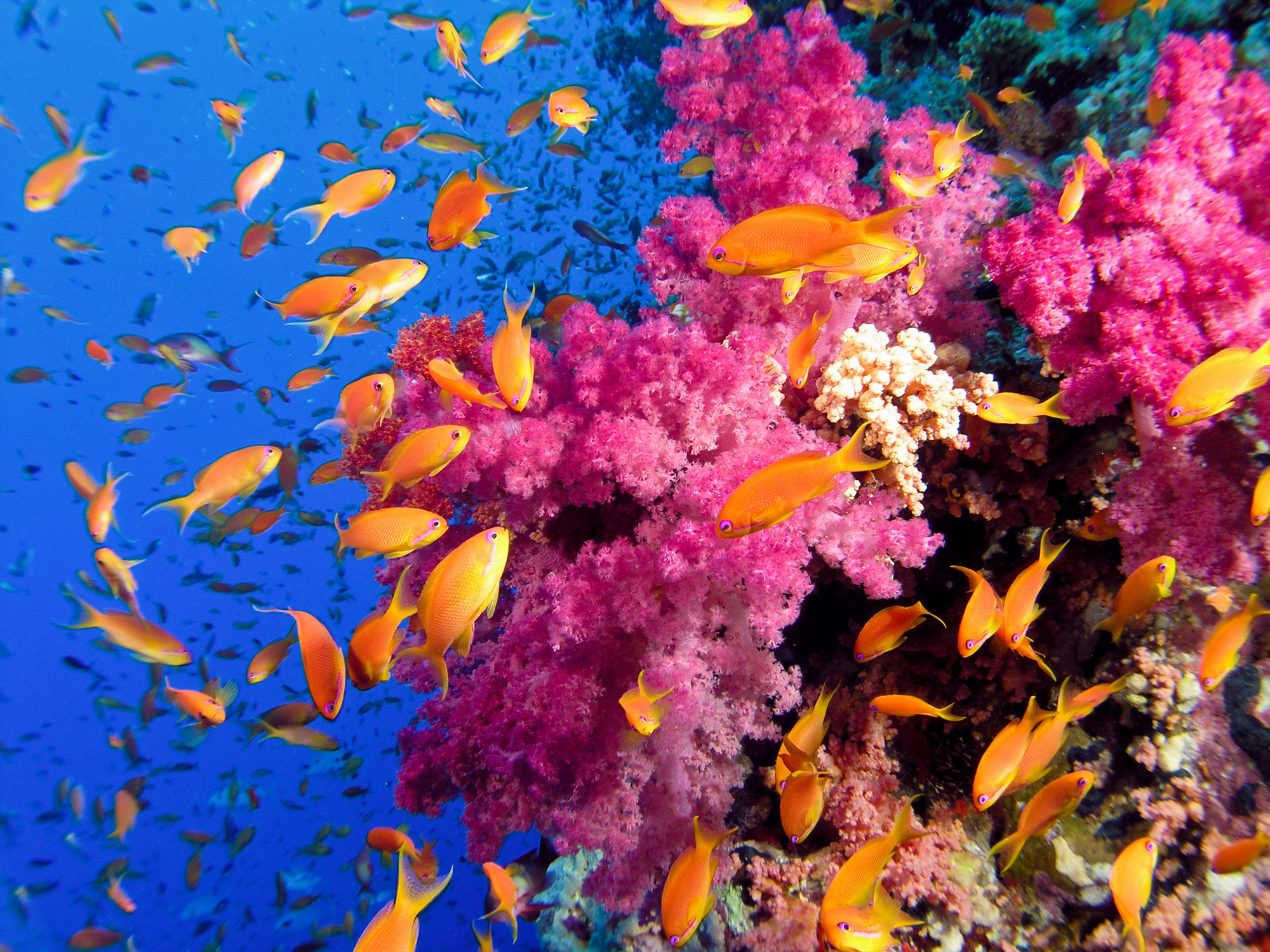 Ocean sea tropical underwater color reef coral school wallpaper