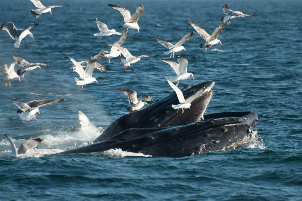 nature ocean sea bay harbor breach gulls birds wallpaper