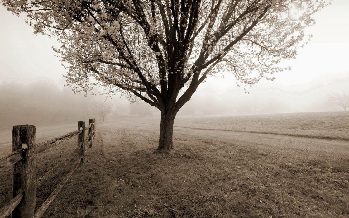 black white sepia trees fog mist autumn fall fence roads path trail wallpaper