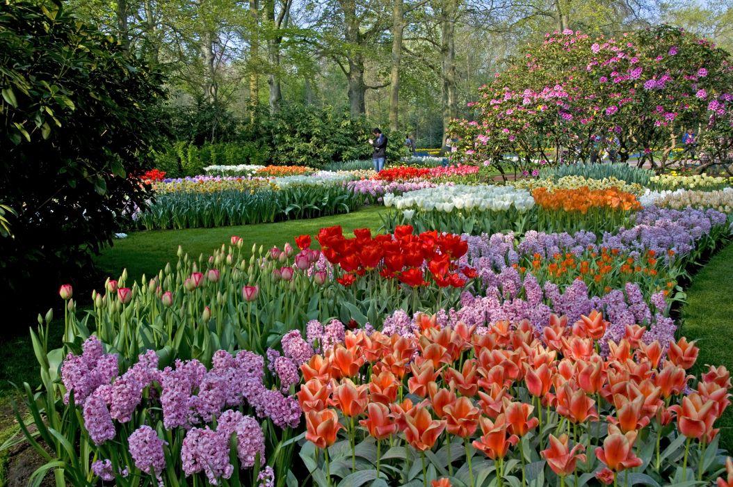 landscapes garden park color trees blossom wallpaper