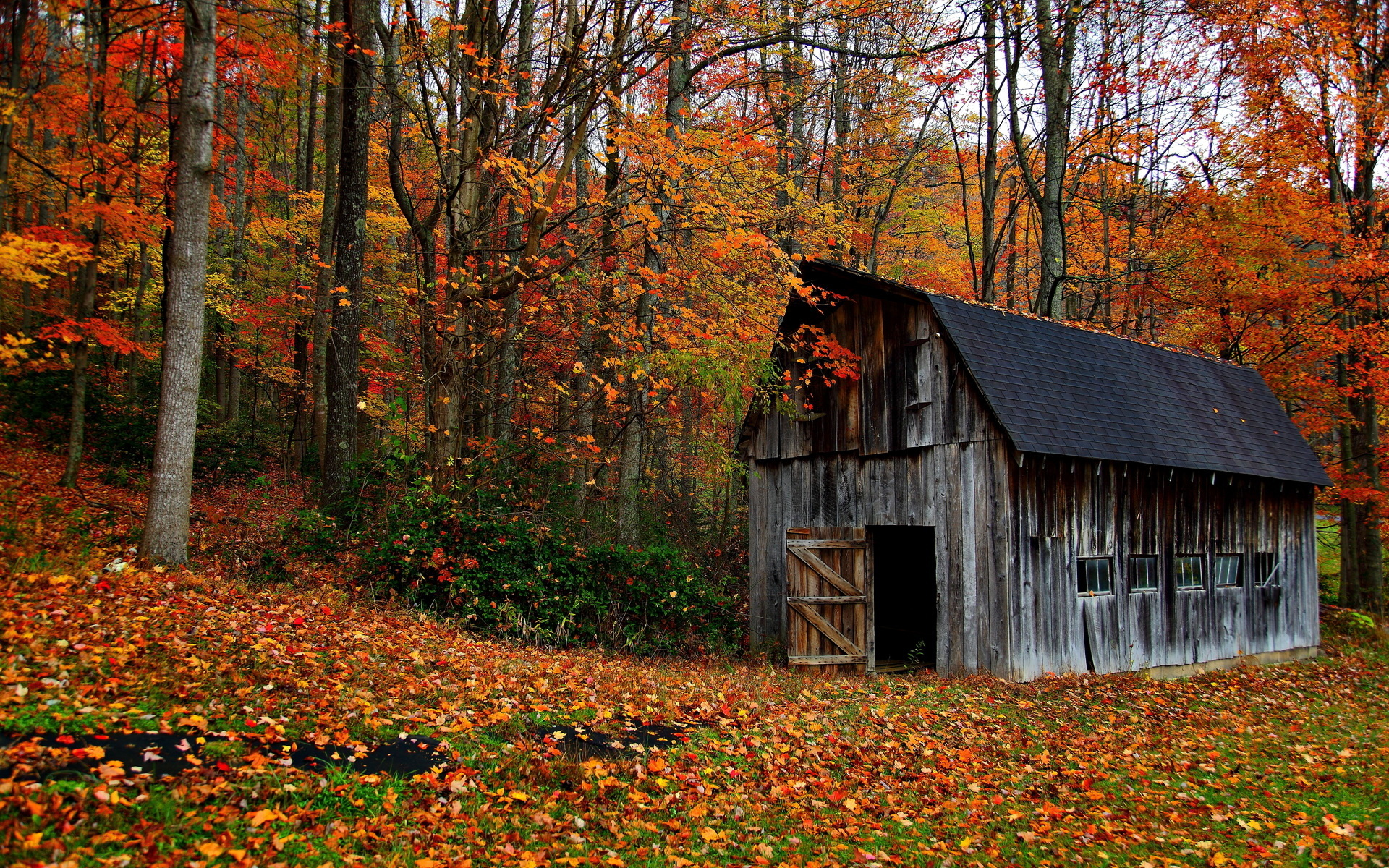 Nature Landscapes Trees Forest Barn Decay Ruin Retro Autumn Fall Leaves Rustic Wallpaper