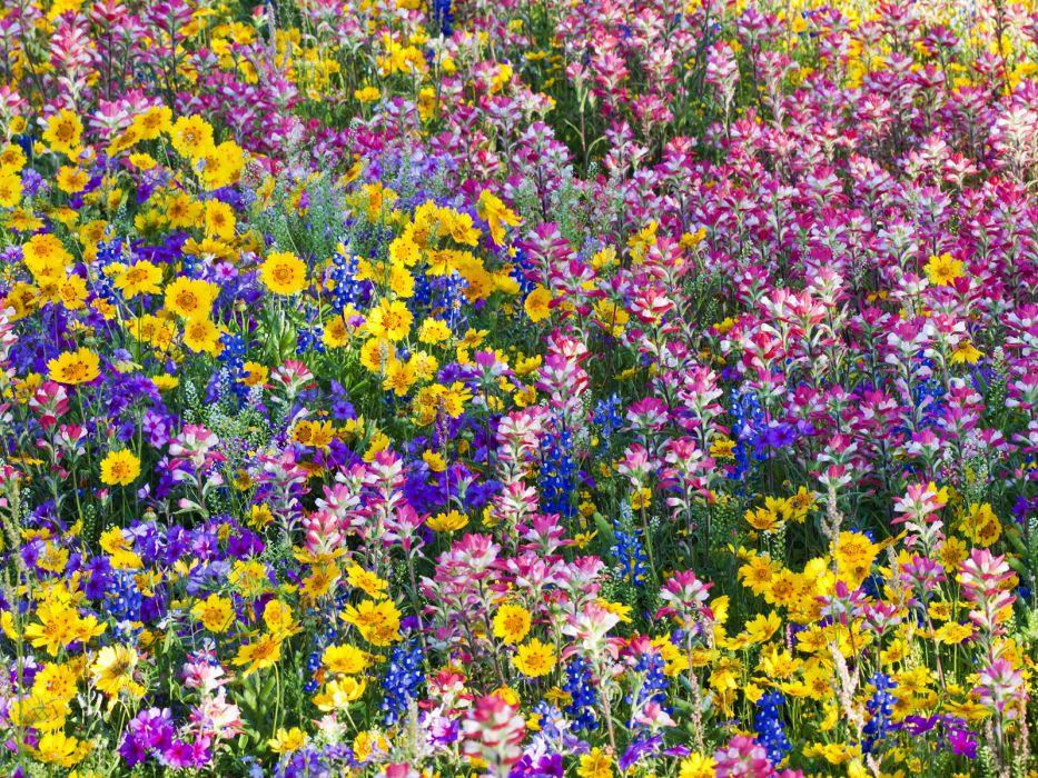 landscapes garden color plants wallpaper