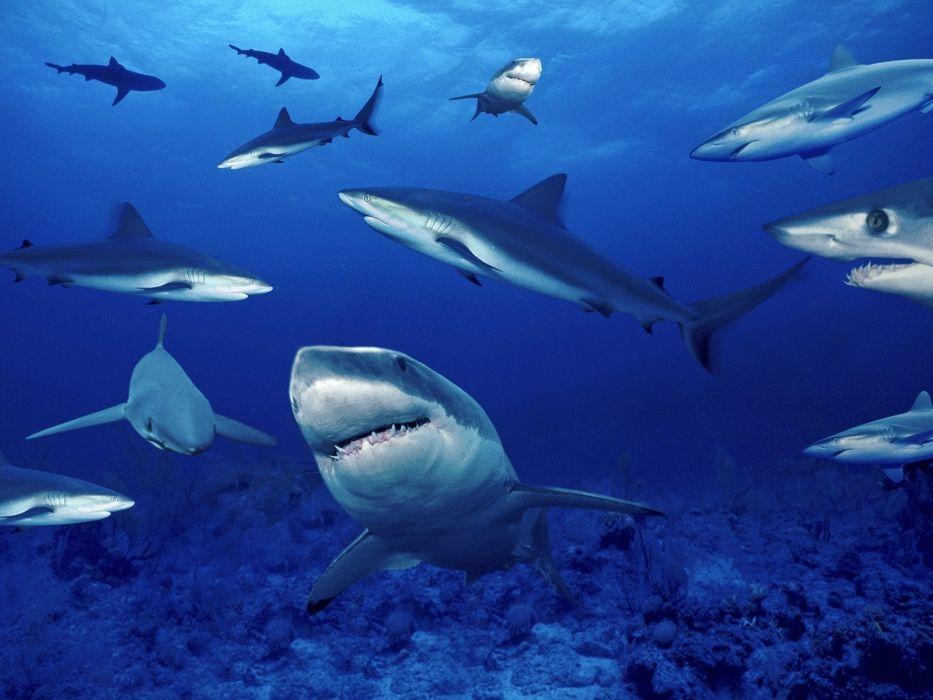 sharks ocean sea nature school underwater wallpaper