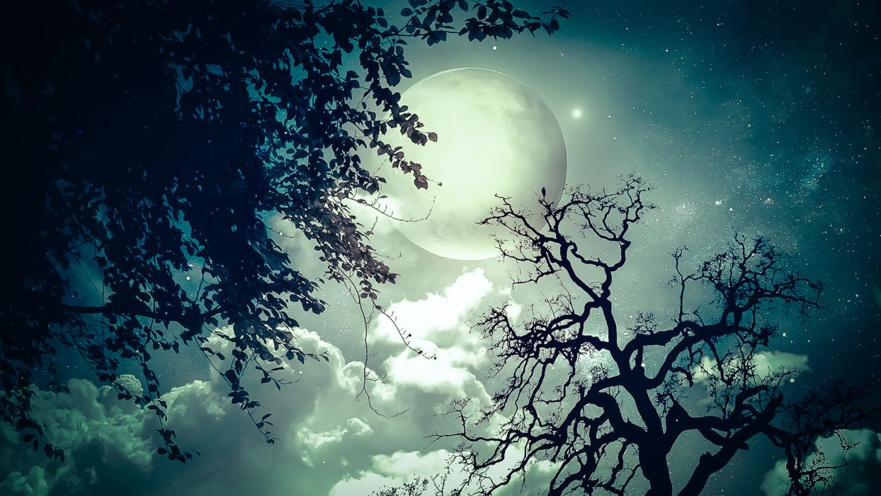 moon trees clouds dream stars wallpaper