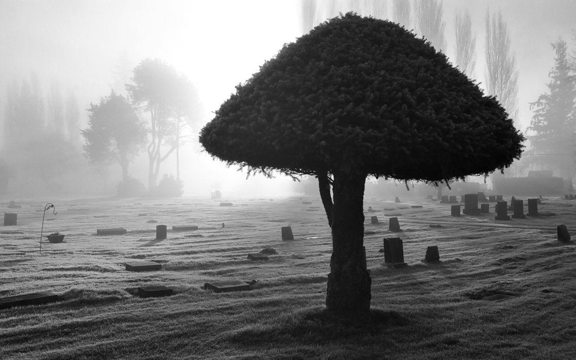 dark horror gothic cemetary grave black white spooky creepy lfog mist mood wallpaper