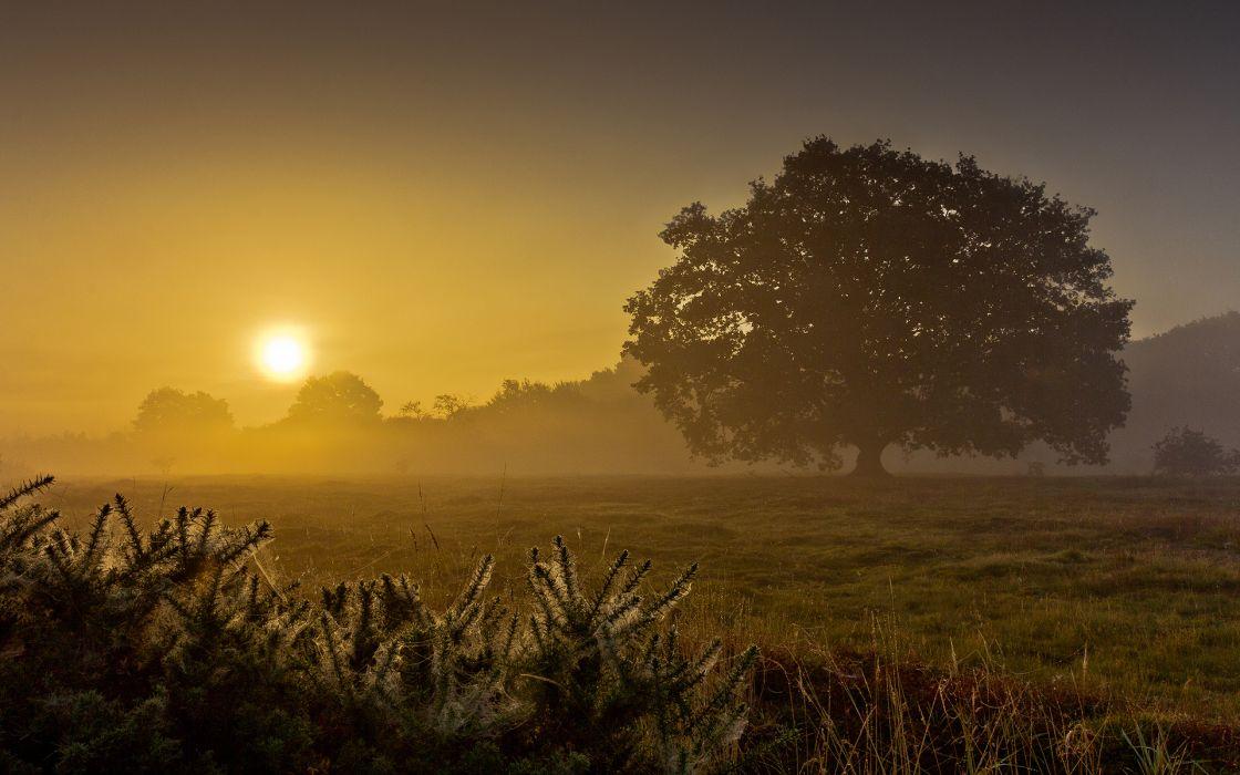 landscapes fields grass trees dawn morning sunrise sunset fog mist sky gold wallpaper