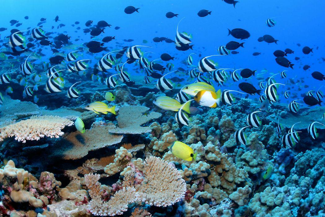 underwater ocean sea nature tropical reef coral wallpaper