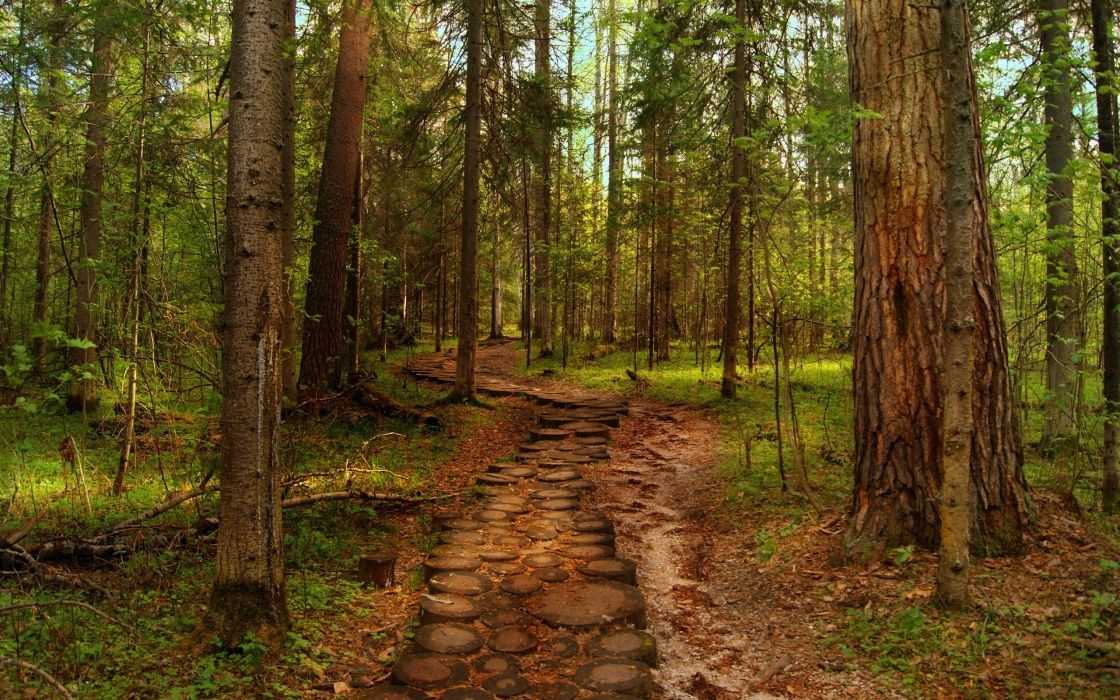 landscapes forest hdr woods trunks path trail wallpaper