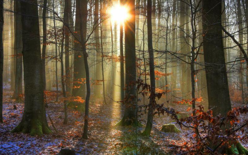 landscapes forest woods trunks sunlight sunrise sunset beam rays winter snow autmn leaves wallpaper