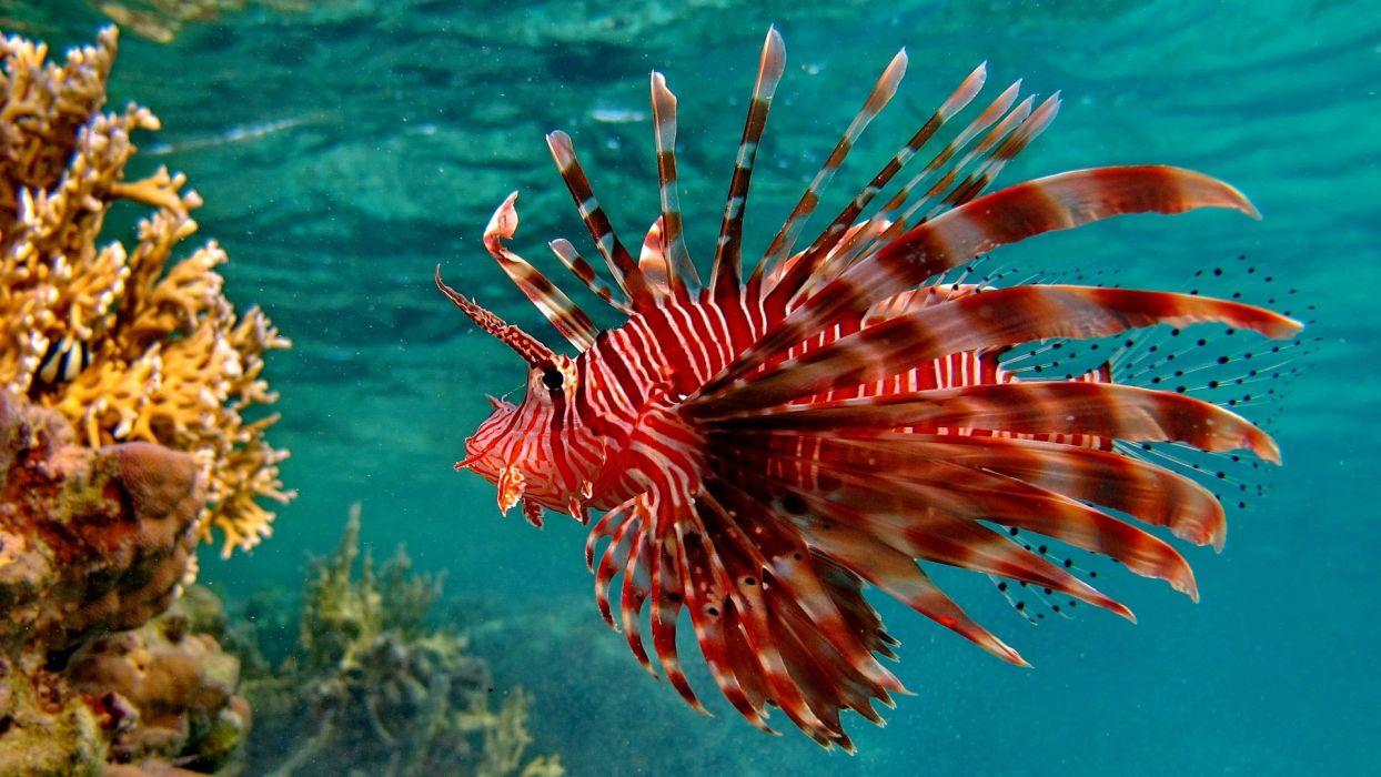 underwater tropical ocean sea color wallpaper