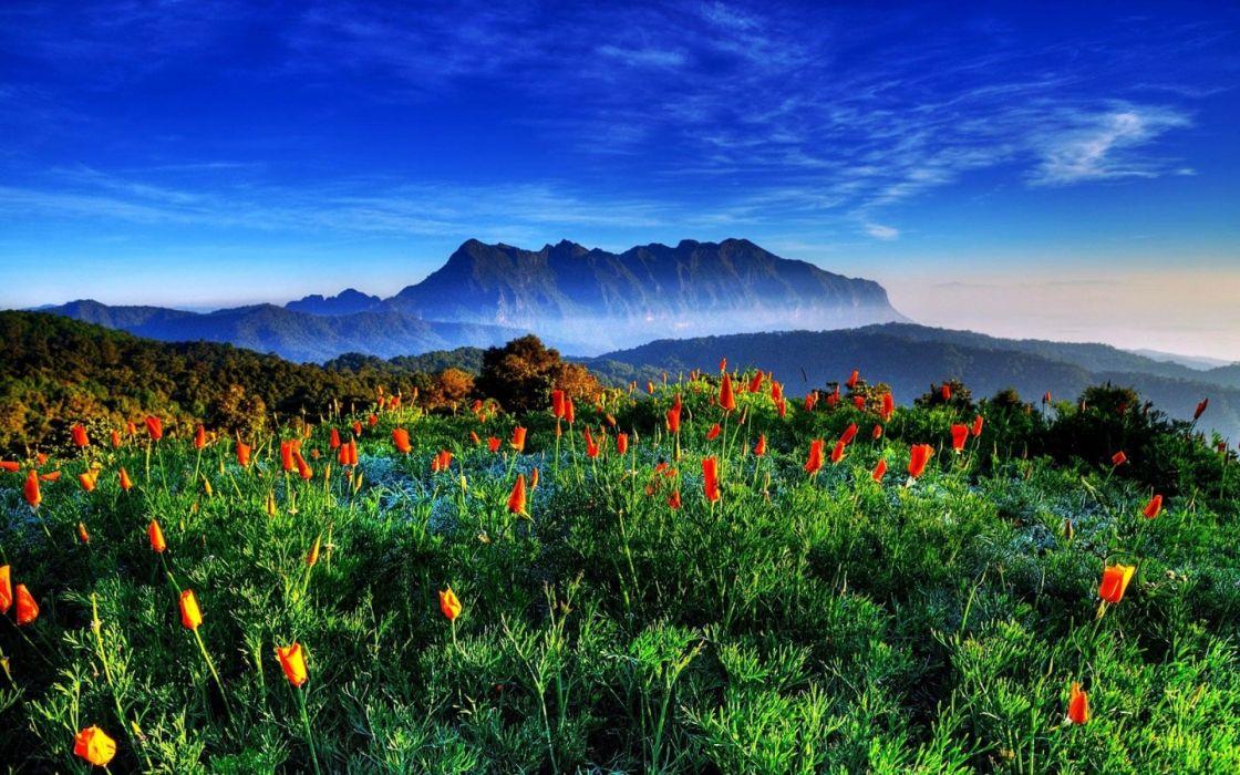 mountains flowers fields meadow fog haze mist hdr sky clouds wallpaper