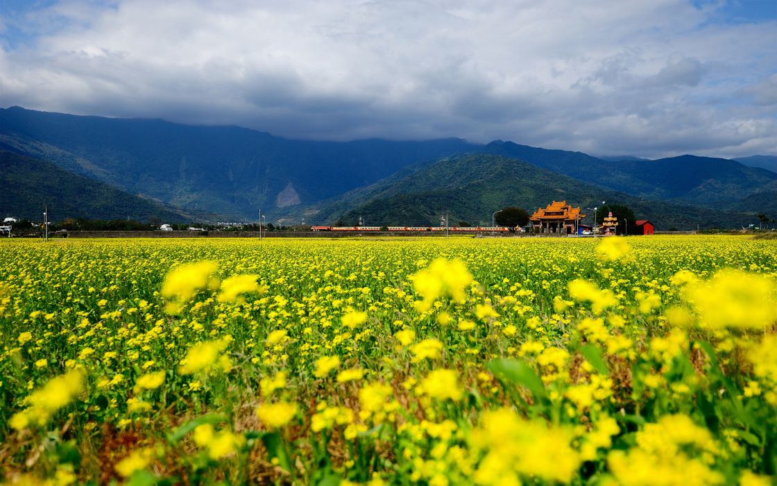 nature landscapes asian oriental fields flowers yellow mountains sky clouds wallpaper