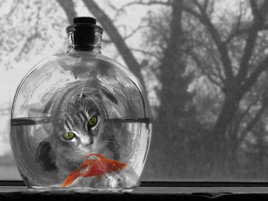 selective color black white goldfish humor mood eyes wallpaper