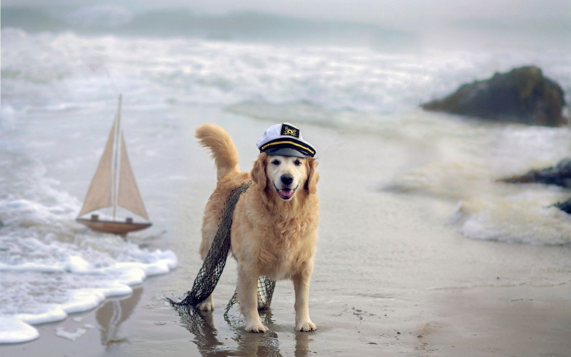 humor cute costume sailboats boats beaches nature waves wallpaper