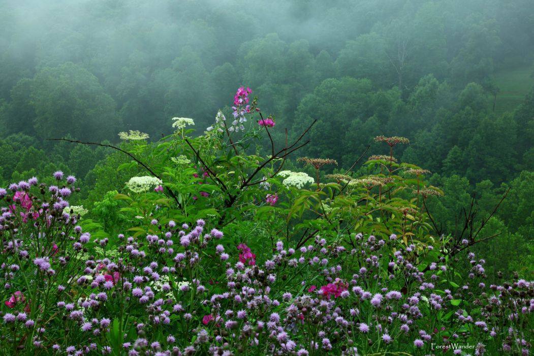 landscapes flowers meadow hill trees forest woods fog mist clouds wallpaper