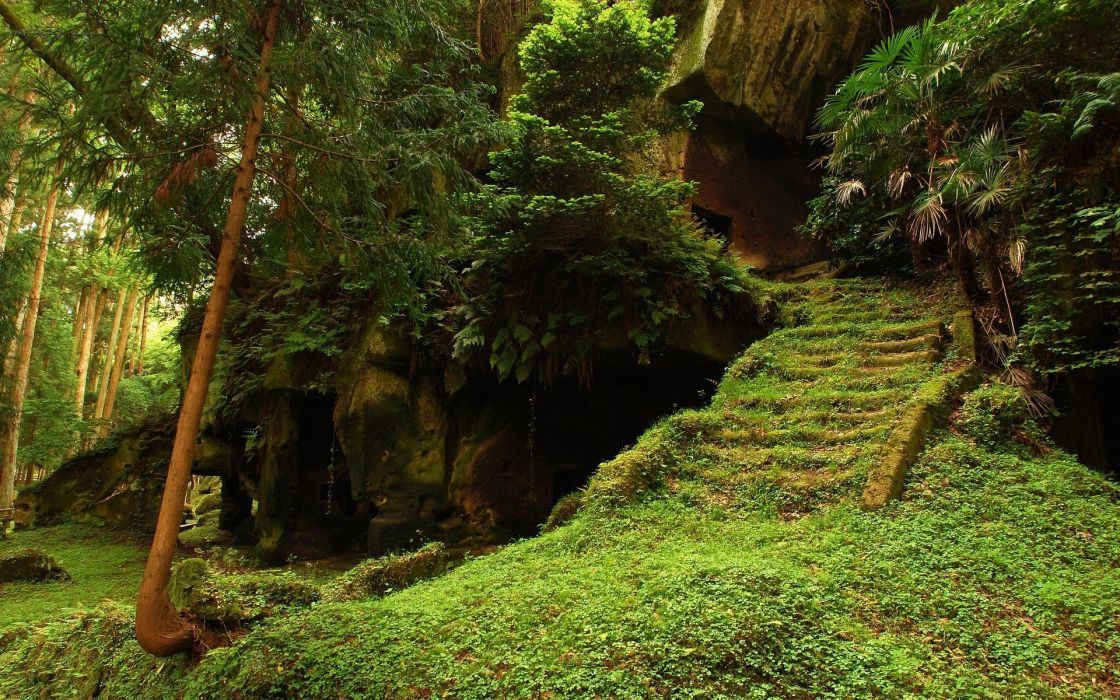 trees forest woods stair retro ancient plants green architecture wallpaper