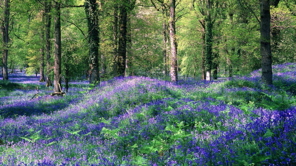 flowers meadow trees forest woods wallpaper