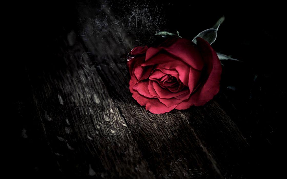 dark gothic holidays valentine's day roses mood wallpaper