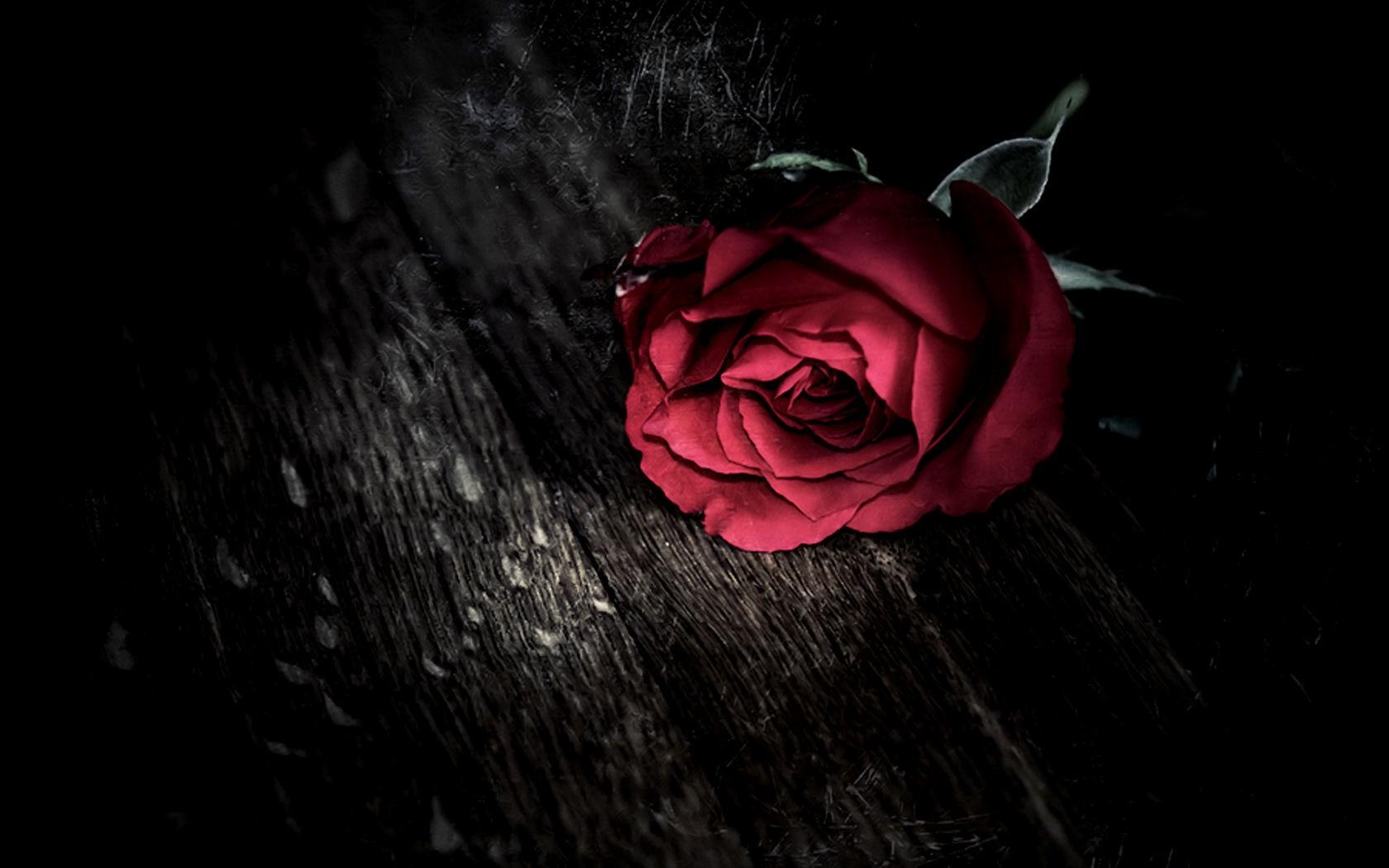 Black Rose Wallpaper Gothic