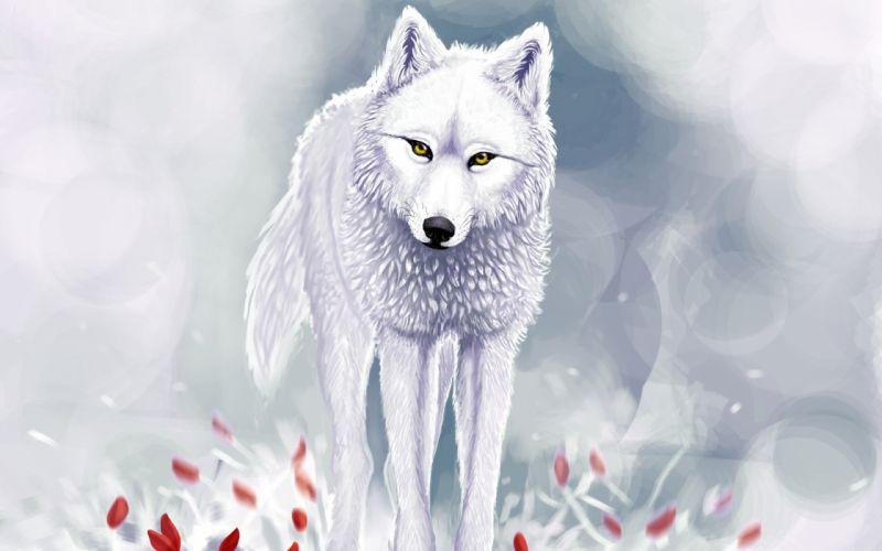 art fantasy wolf wolves winter snow face eyes pov wallpaper