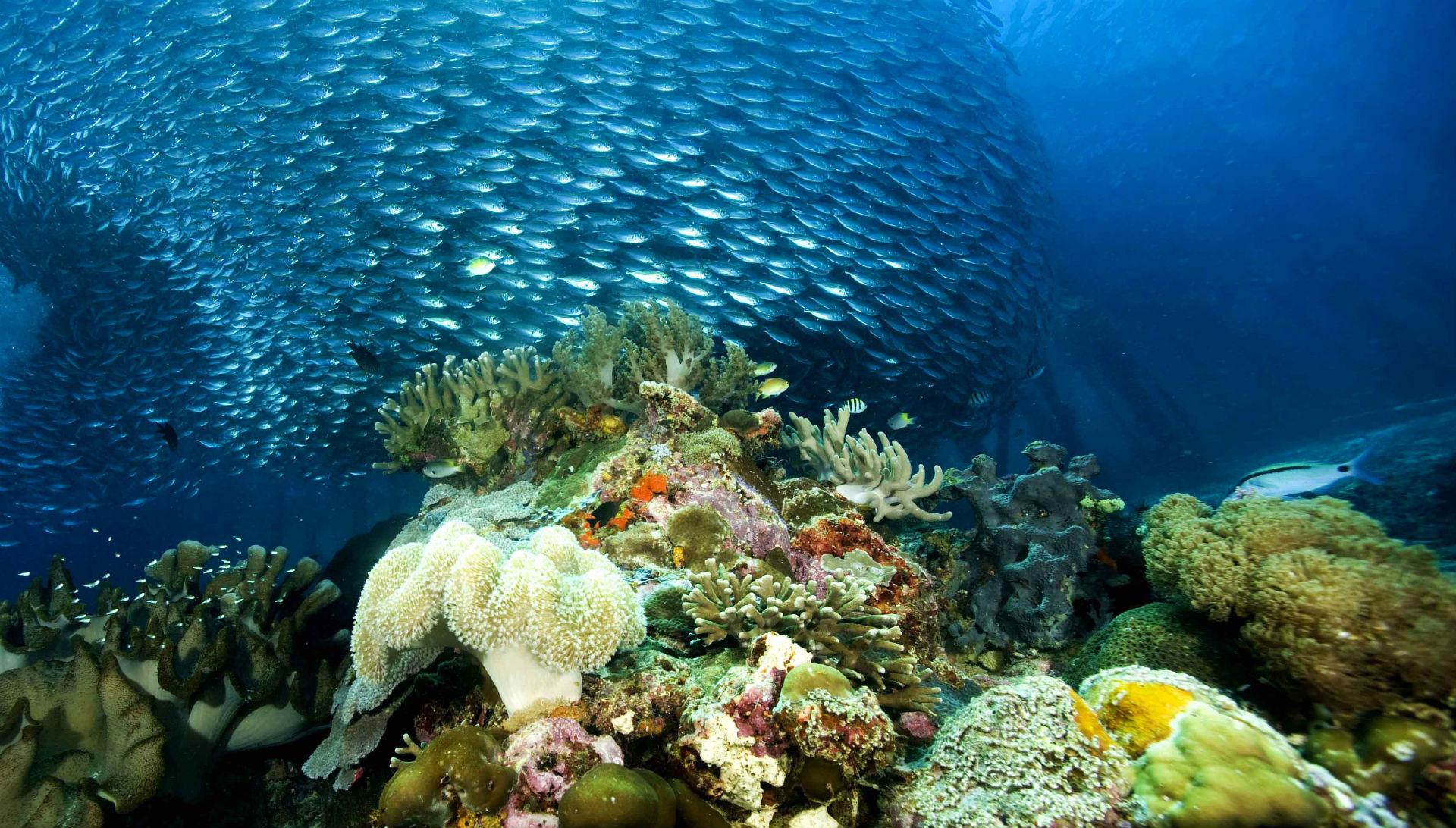 Underwater ocean sea nature coral reef tropical school ...