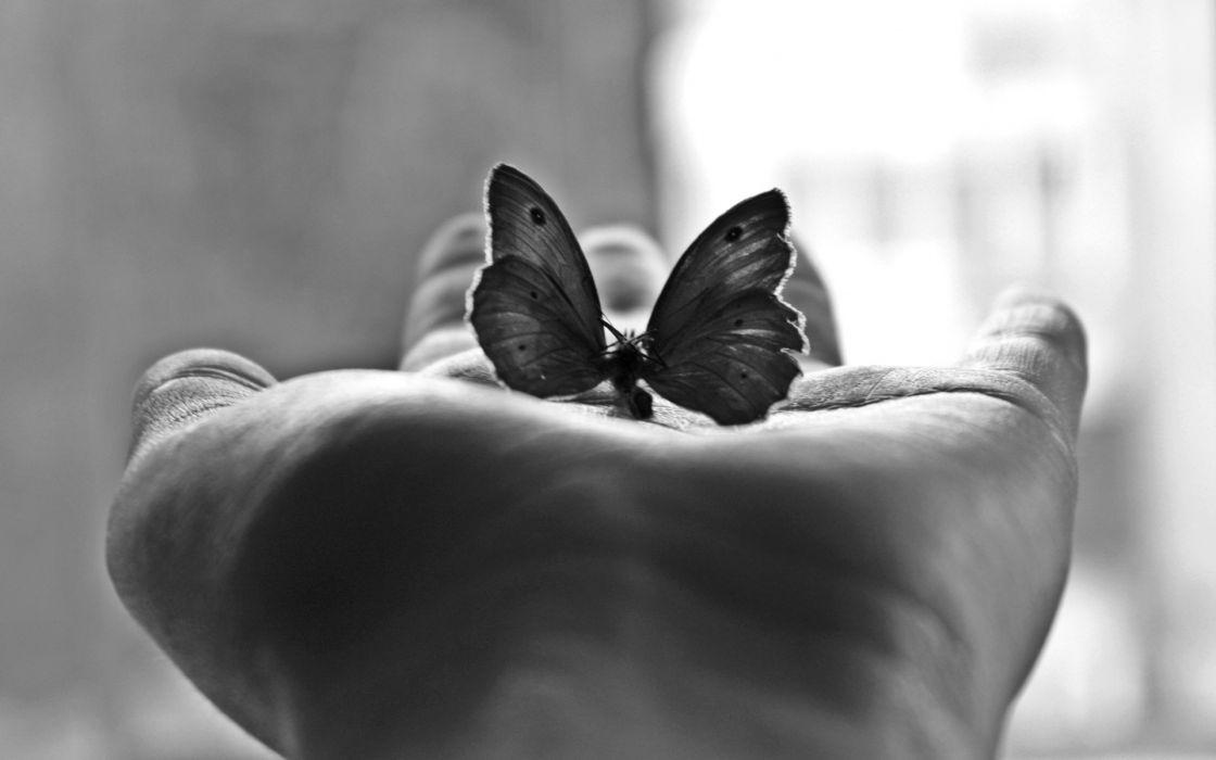 butterfly mood hand black white window light wallpaper