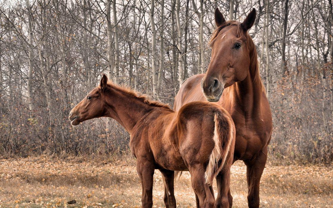 horses babies wallpaper