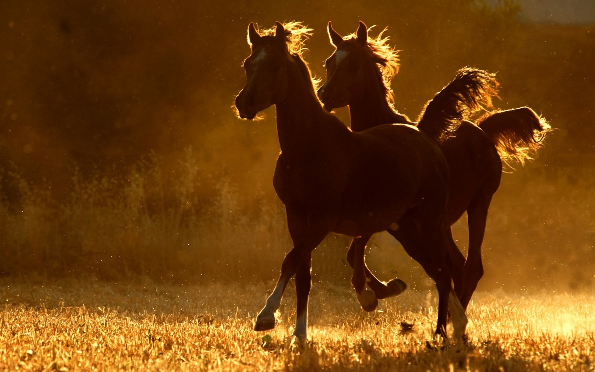 download wallpaper horses sunset - photo #16