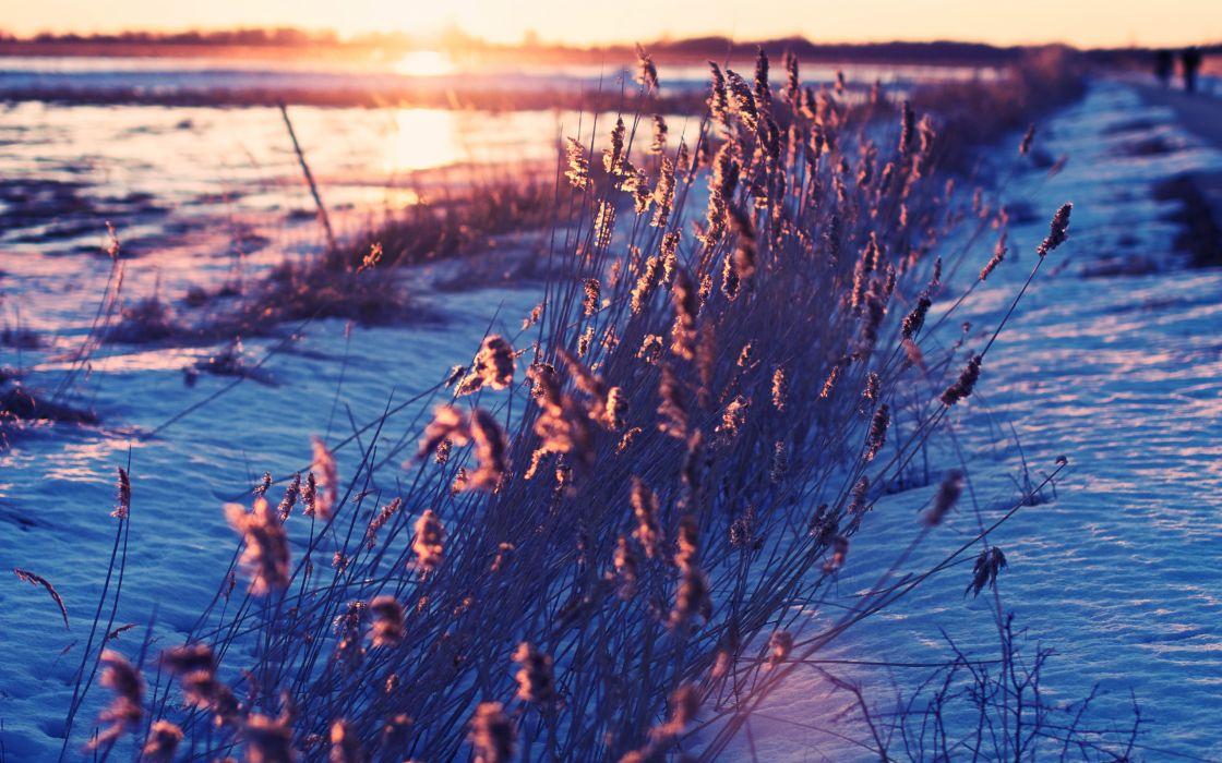 landcapes winter snow cold frozen sunset sunrise sunlight grass fields wallpaper