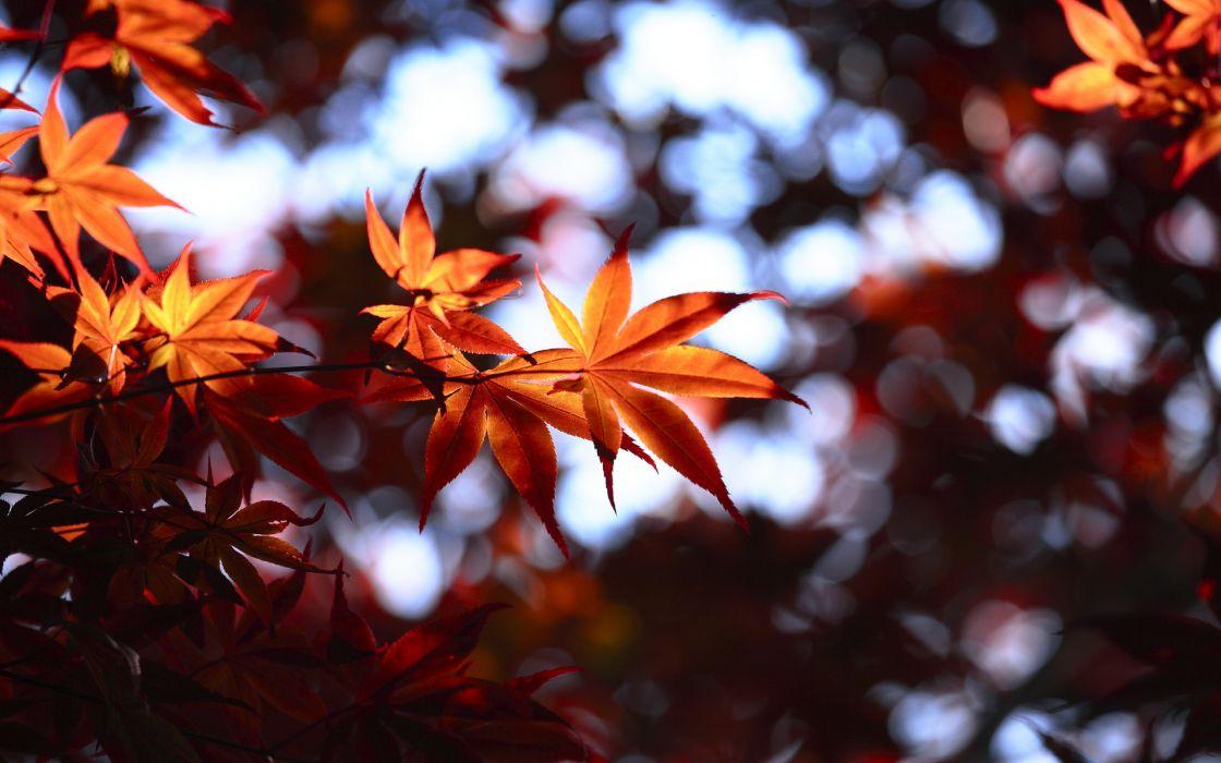 trees macro autumn fall wallpaper