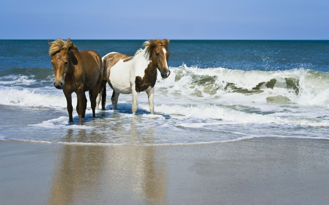 horses beaches ocean sea waves wallpaper
