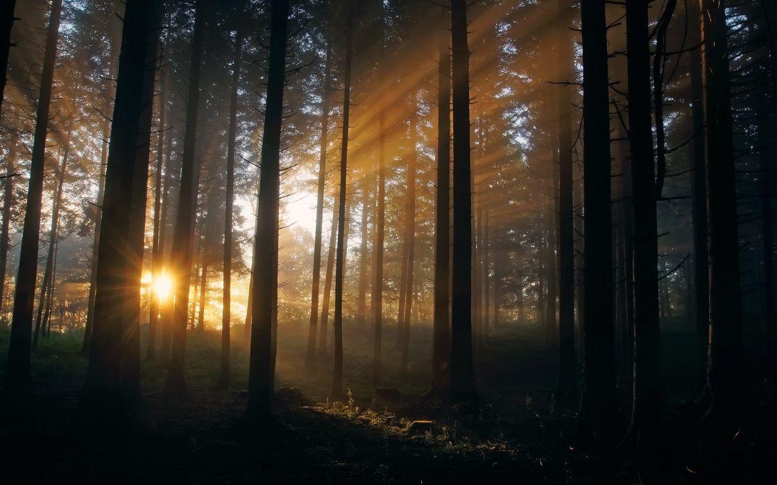 landscapes forest sunlight wallpaper