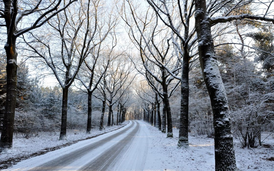 landscapes nature winter trees snow wallpaper