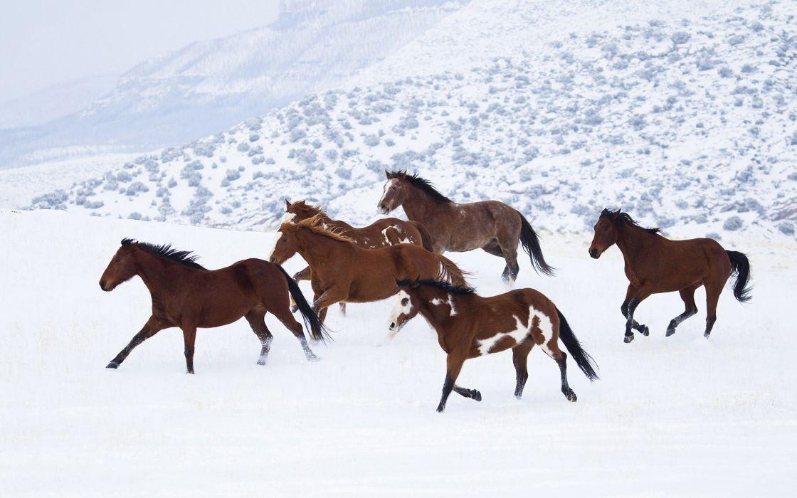 landscapes winter snow horses wallpaper