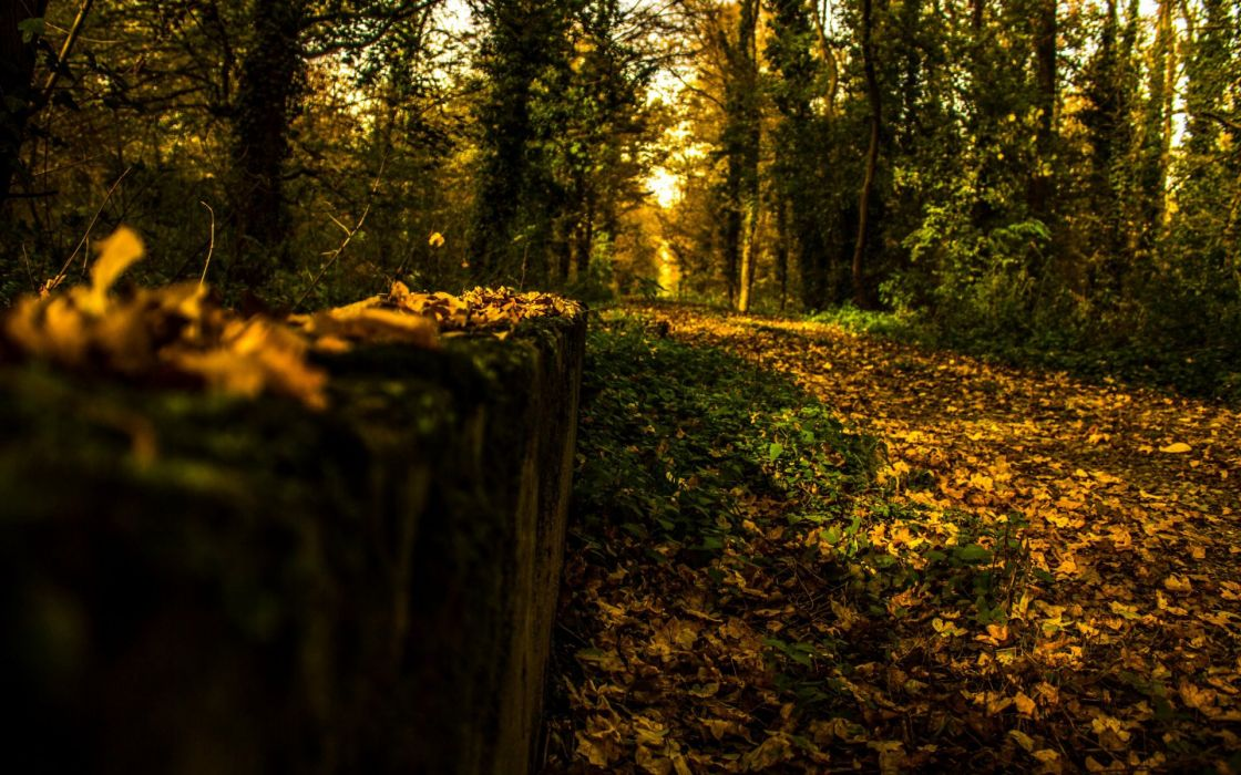 trees forest woods path trail landscapes autumn fall wallpaper