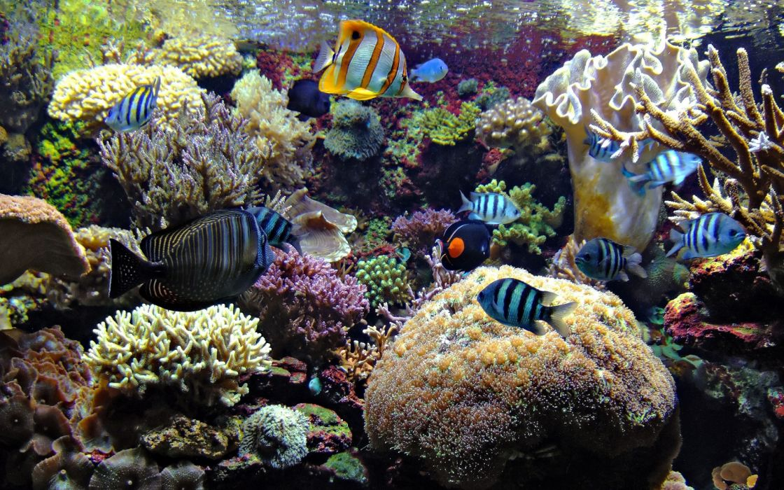 underwater ocean sea tropical reef coral wallpaper
