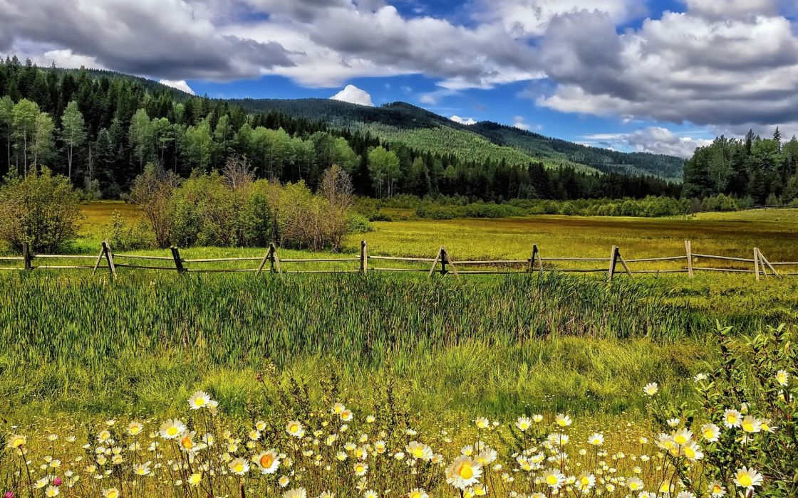 flowers meadow fence rustic grass mountains hills trees forest woods sky clouds wallpaper
