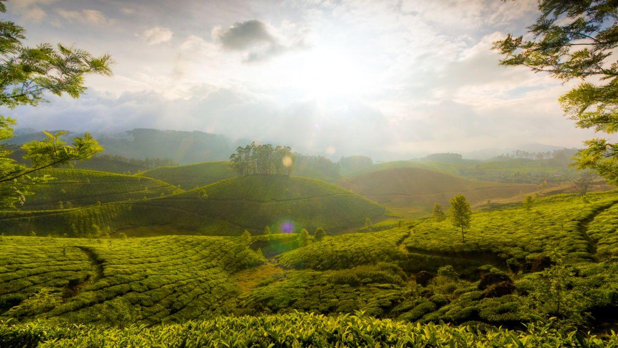hills vineyard fog mist sky clouds sunlight trees wallpaper
