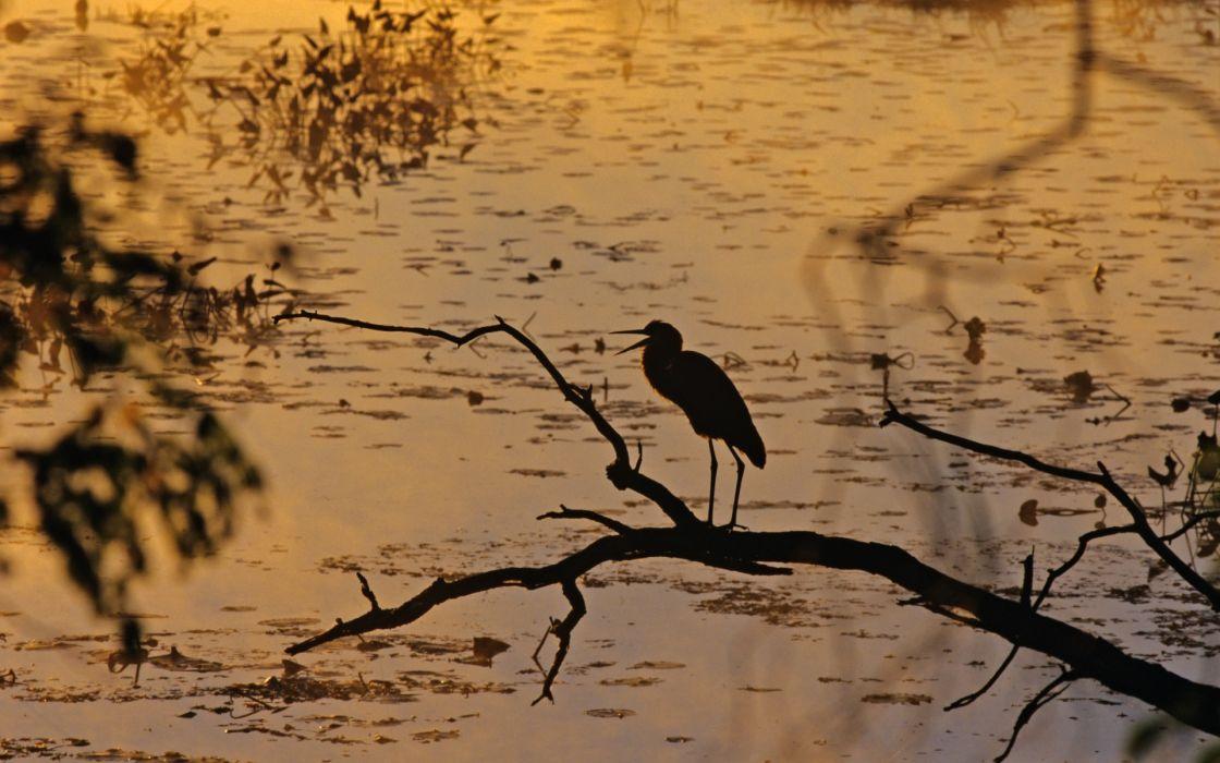 cranes lakes water trees branch fishing hunting nature wallpaper