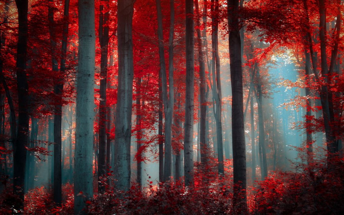 landscapes forest woods leaves fall autumn sunlight light filtered wallpaper