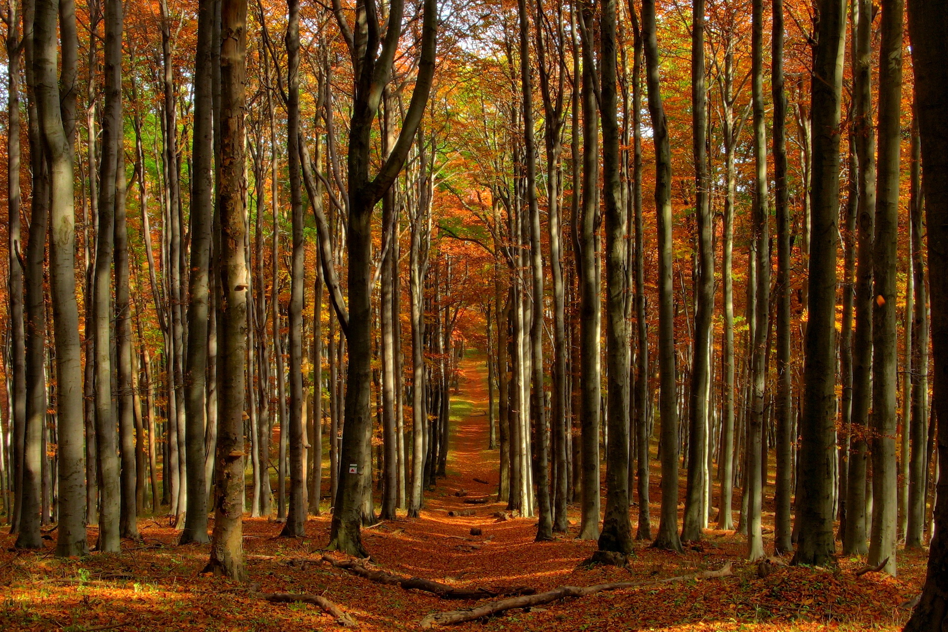fall woods backgrounds wallpapers - photo #5