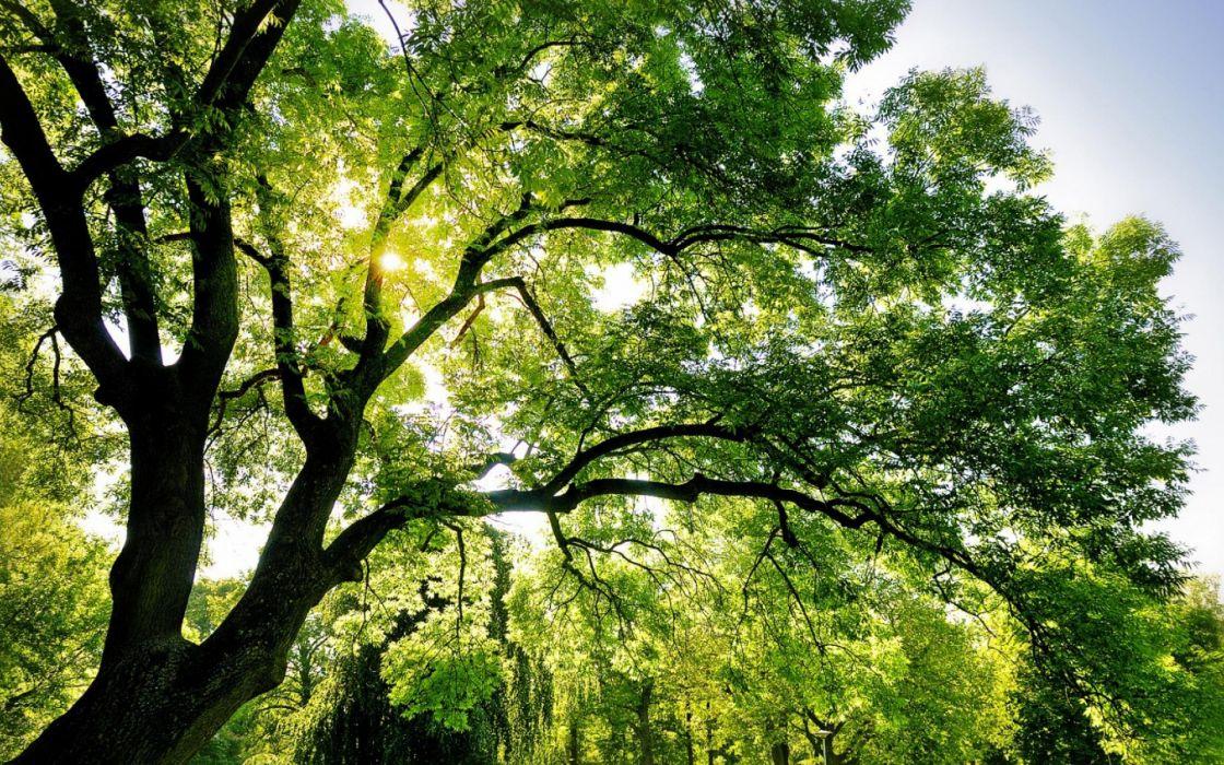 filtered sunlight leaves summer wallpaper