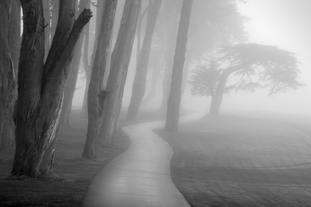 park trees path trail fog mist black white bw wallpaper
