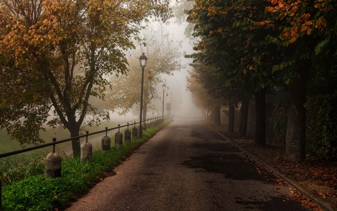 trees park trail path fog autumn fall leaves landscapes wallpaper