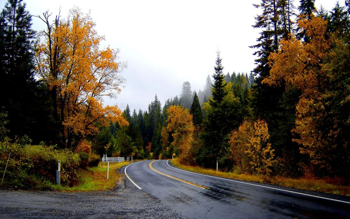 landscapes nature trees forest woods autumn fall leaves rain wet sky wallpaper