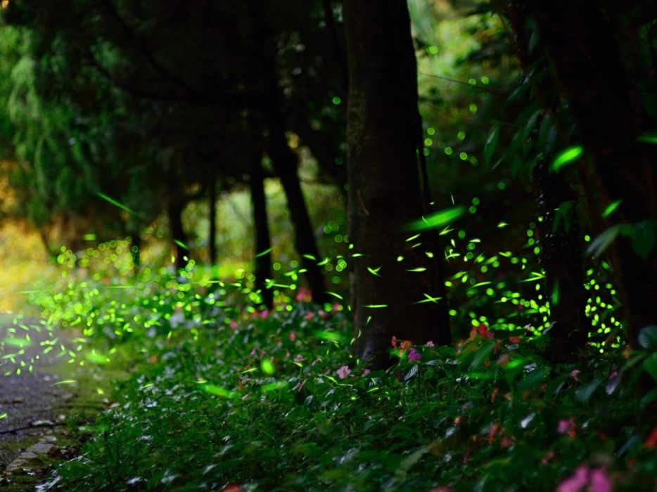 firefly roads nature landscapes trees forest woods glow wallpaper