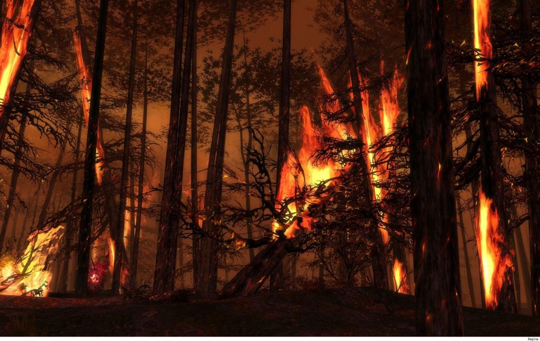 landscapes forest woods fire flames wallpaper