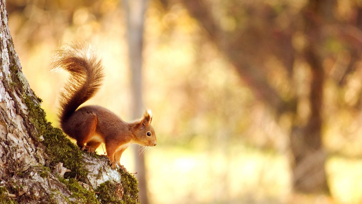 squirrel rodent nature trees wallpaper