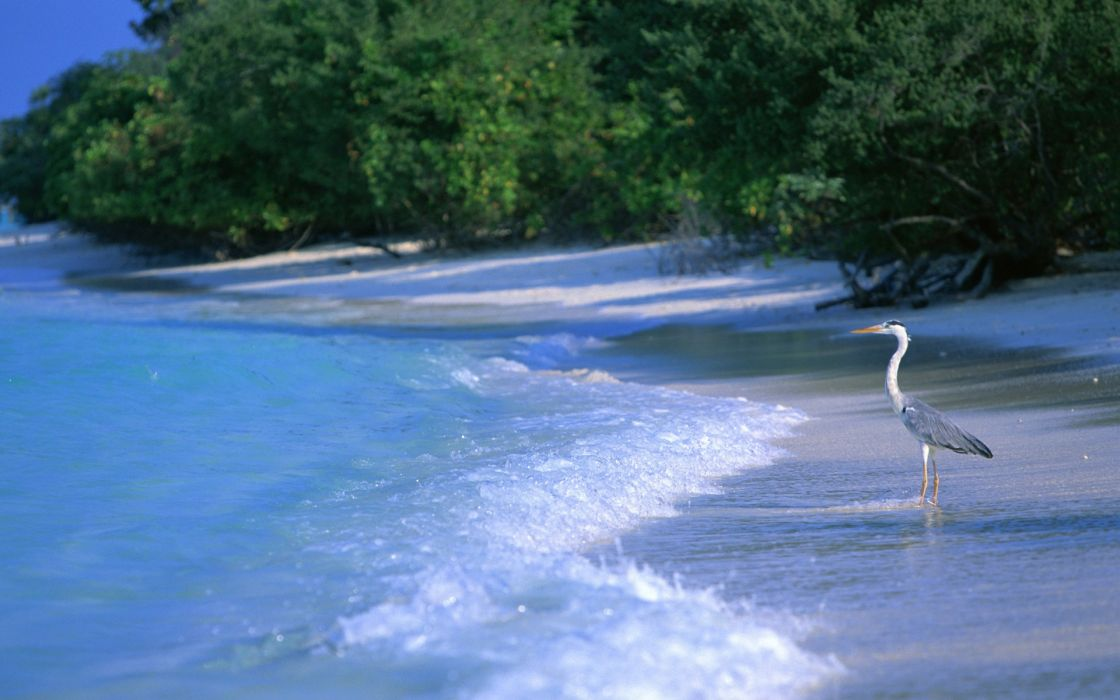 animals birds crane ocean sea waves trees tropical wallpaper