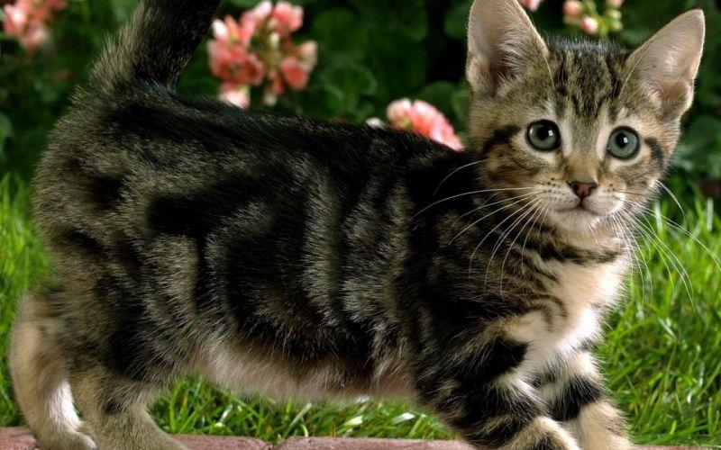 kittens flowers wallpaper